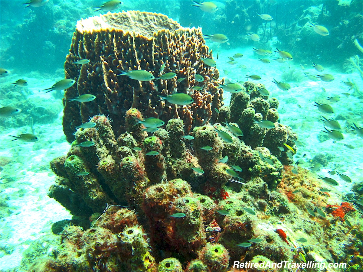 Lots of Fish - Scuba Diving In St Lucia.jpg