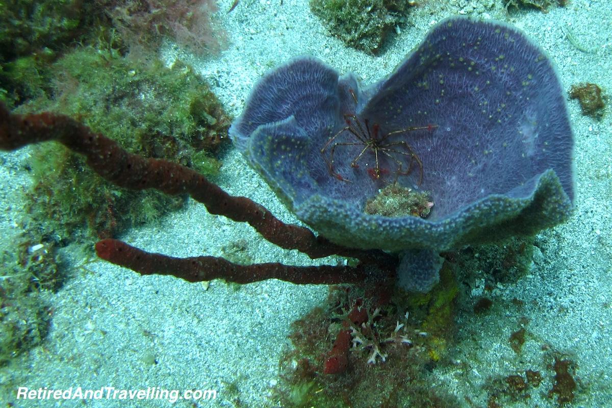 Cleaner Shrimp - Scuba Diving In St Lucia.jpg