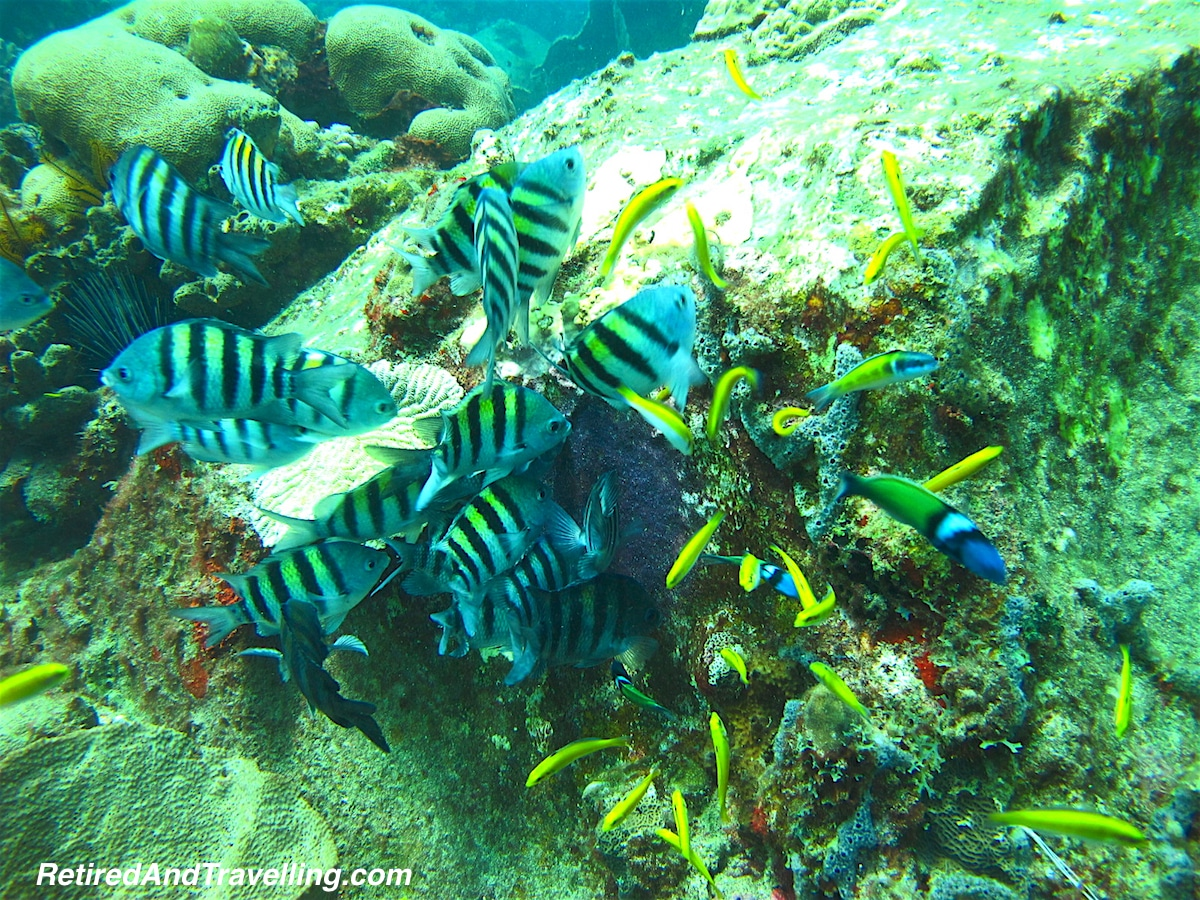 Sargent Major Cluster - Scuba Diving In St Lucia.jpg