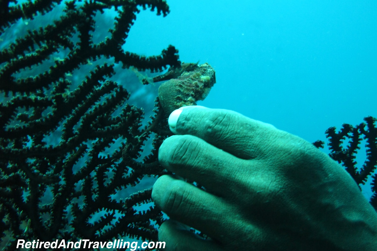Sea Horse - Scuba Diving In St Lucia.jpg