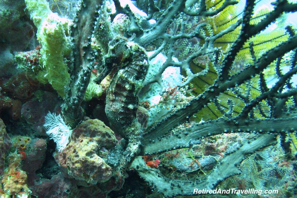 Sea Horse - Scuba Diving In St Lucia.jpg