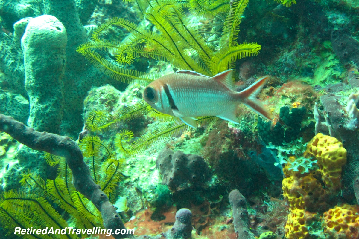 Squirrel Fish - Scuba Diving In St Lucia.jpg