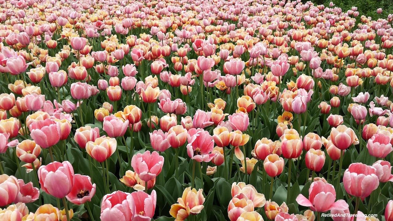 Spring Tulip Festival - Things to Do in Ottawa.jpg