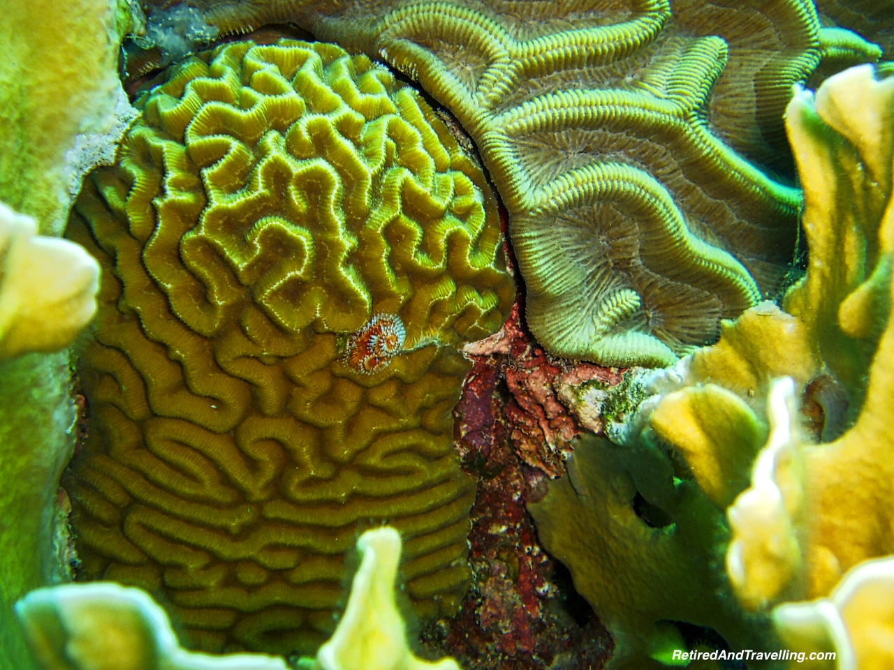 Scuba Diving Coral - Curacao in Hurricane Season.jpg