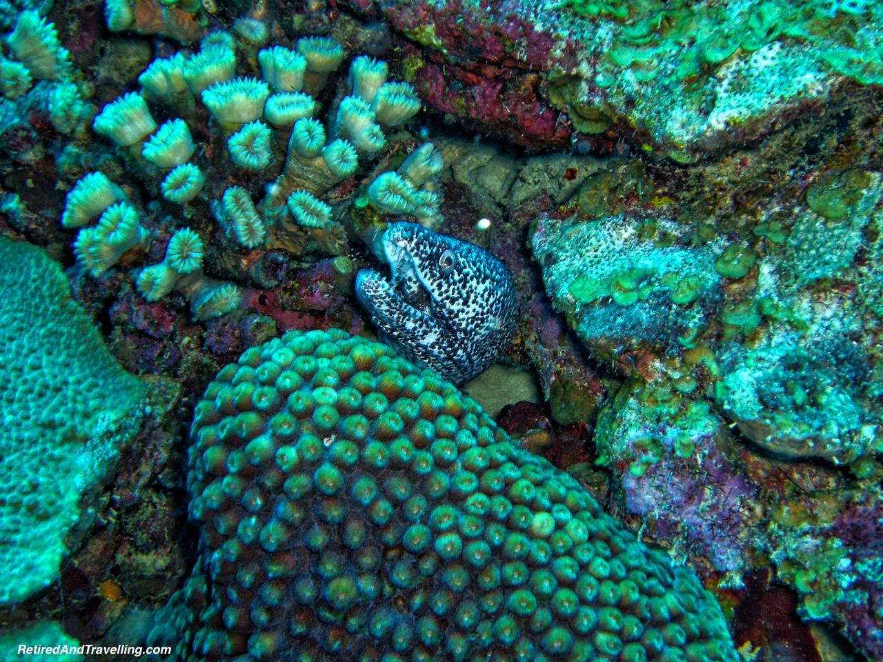 Scuba Diving Eel - Curacao in Hurricane Season.jpg