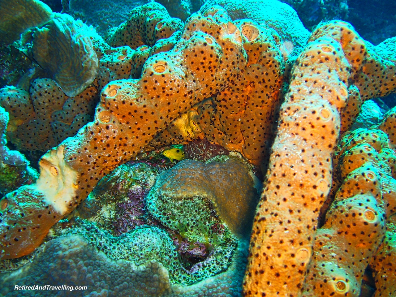 Scuba Diving Sponges - Curacao in Hurricane Season.jpg