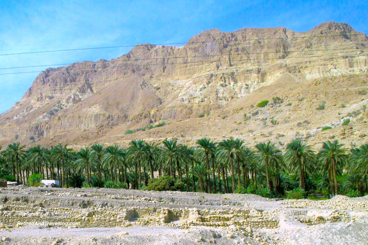 Desert Palms - Masada and the Dead Sea.jpg