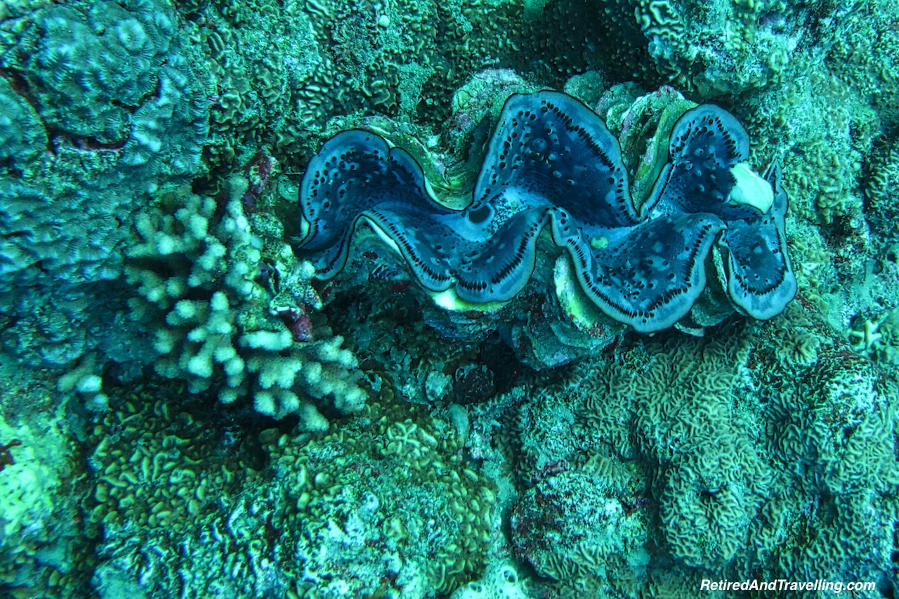 Blue Clam -Scuba Diving the Red Sea.jpg
