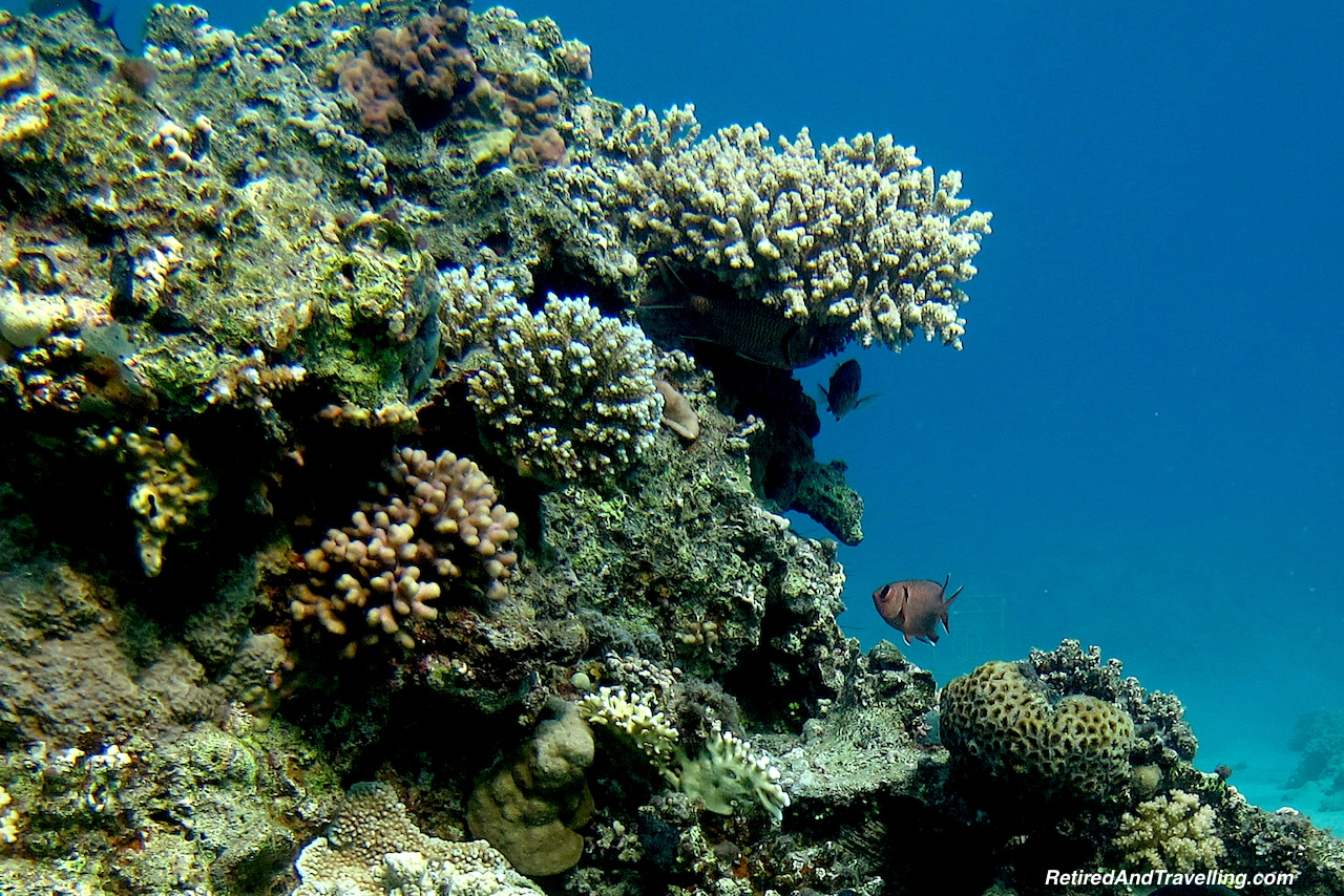 Coral -Scuba Diving the Red Sea.jpg