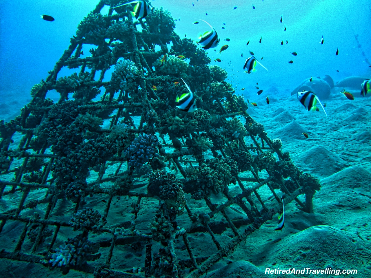 Artificial Reef -Scuba Diving the Red Sea.jpg