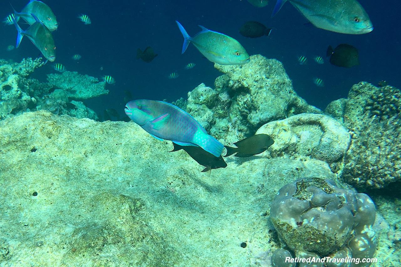 Maldives Snorkeling.jpg