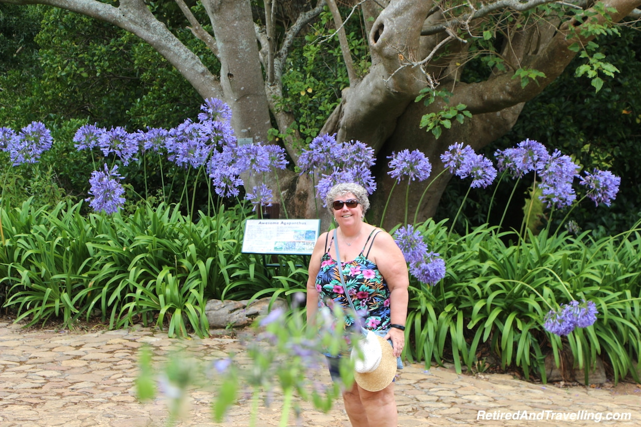 Awesome Agapanthus Garden - Relax in Kirstenbosch Gardens.jpg