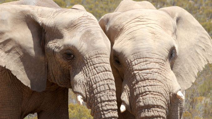A Game Drive From Cape Town.jpg