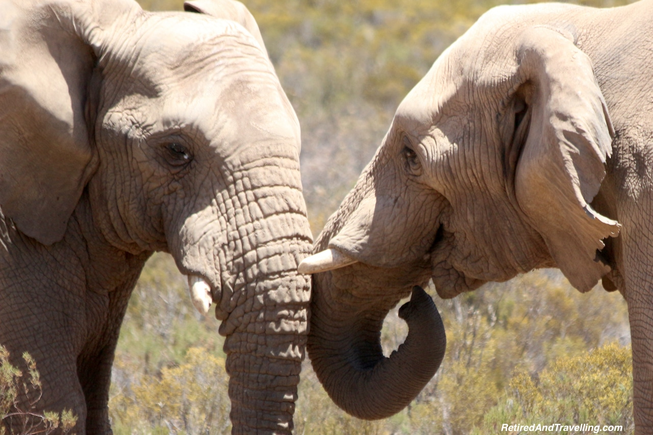 African Elephants - Game Drive From Cape Town.jpg