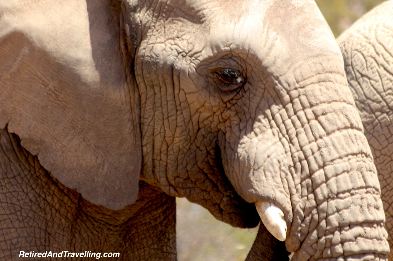 African Elephant Aquila South Africa - Travel Around The World in 2016.jpg