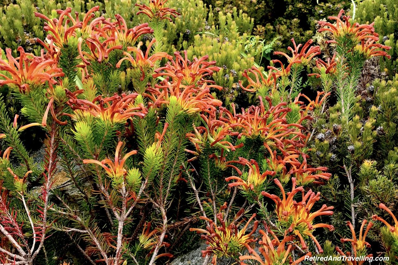 Erica Quadrisulcata Garden - Relax in Kirstenbosch Gardens.jpg