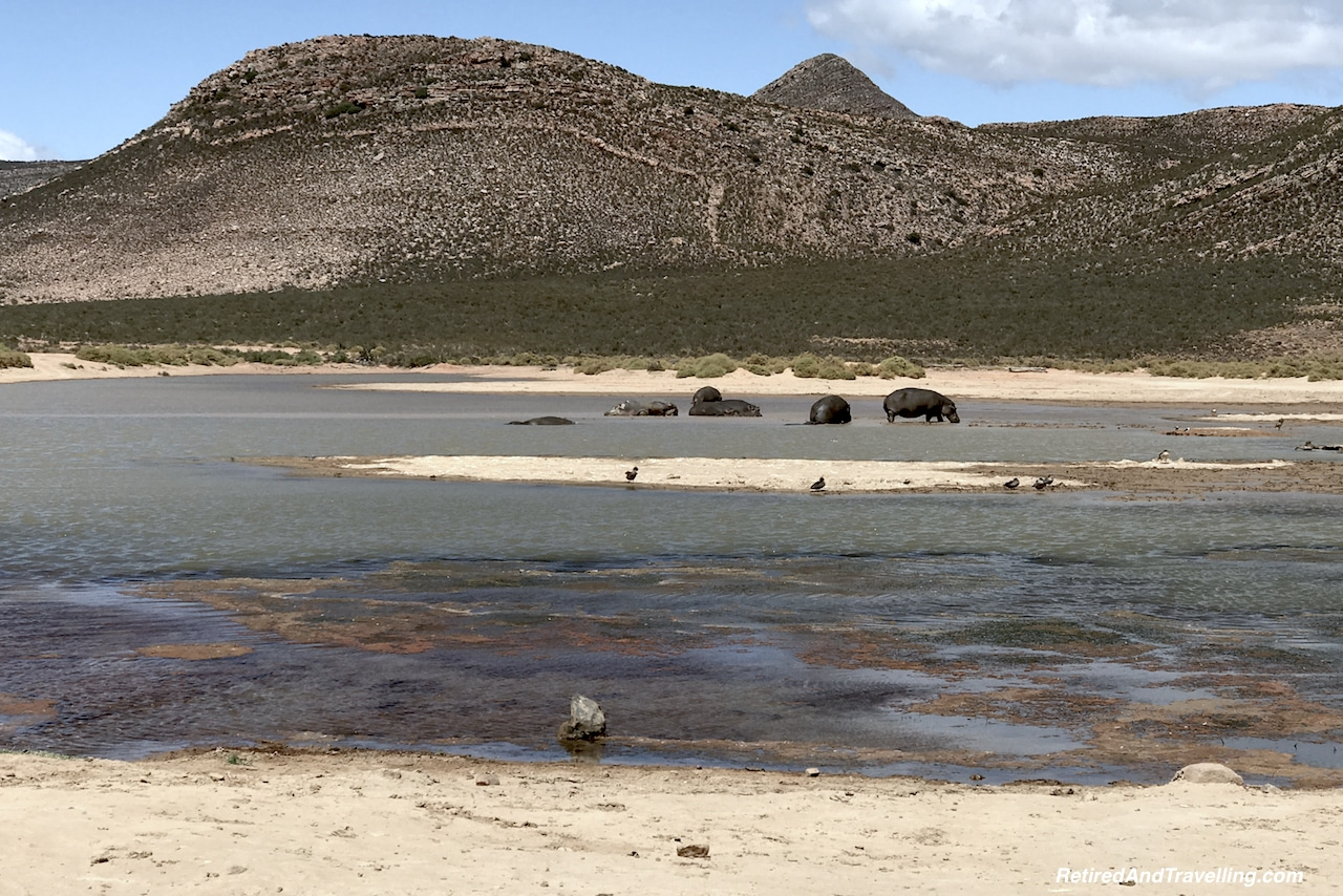 African Hippo - Game Drive From Cape Town.jpg