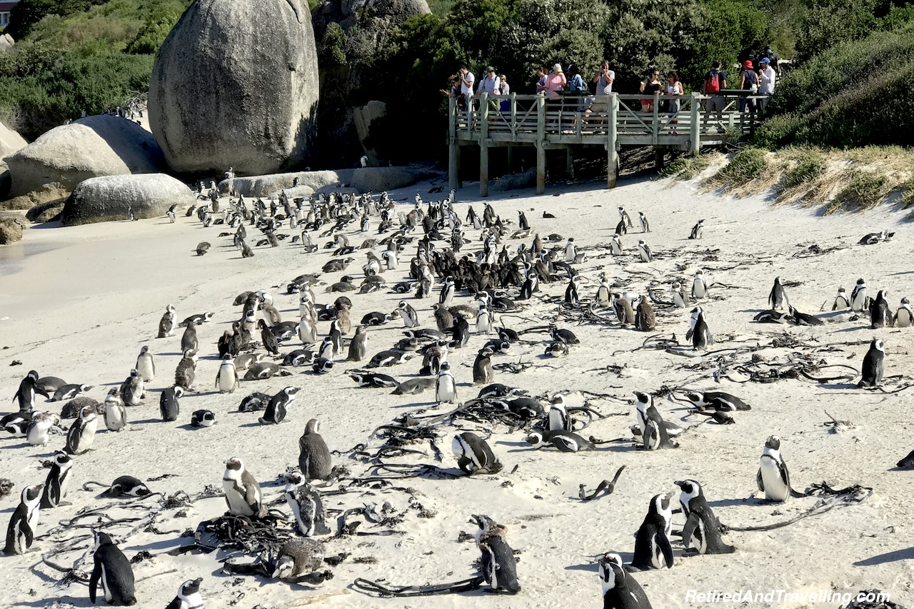 Penguins at Boulder Beach - Sea and Mountains Surround Cape Town.jpg
