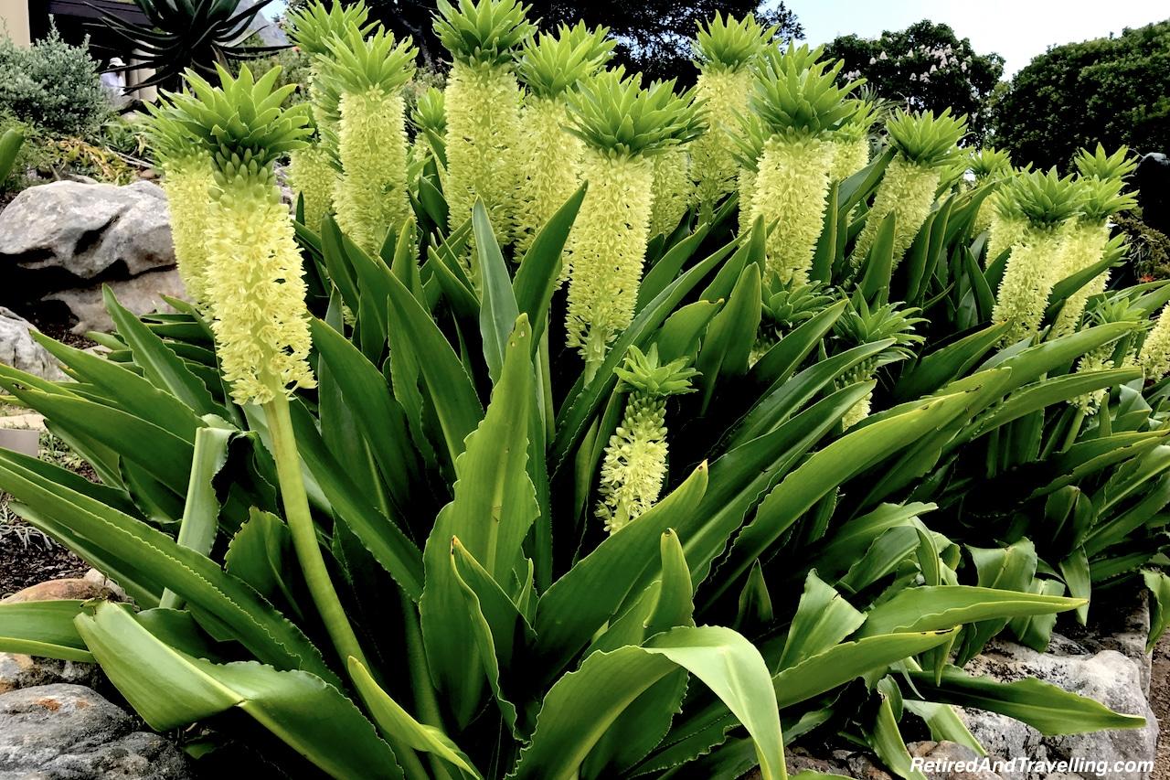 Pineapple Flower Garden - Relax in Kirstenbosch Gardens.jpg