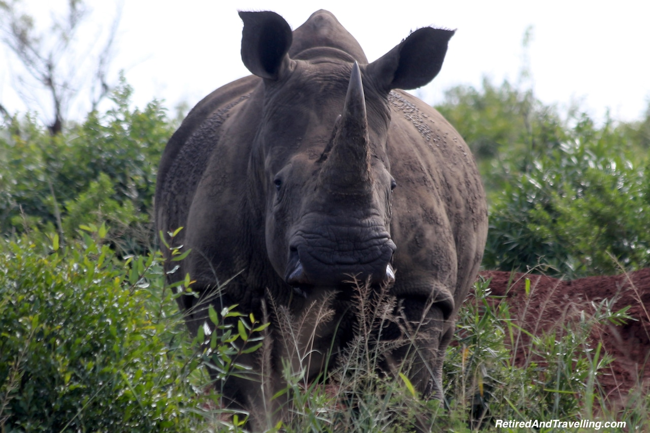 Rhino - Game Drive From Cape Town.jpg