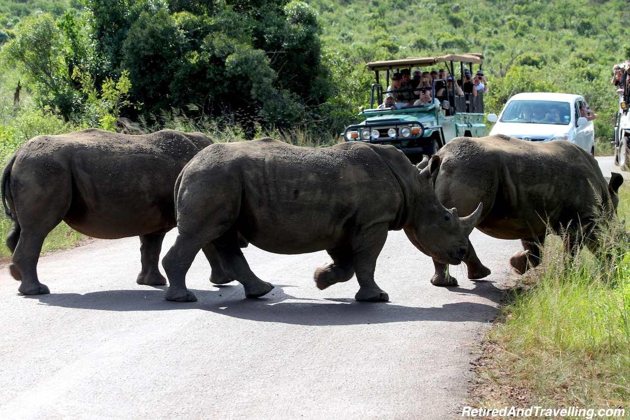 African White Rhino Richards Bay South Africa - Travel Around The World in 2016.jpg