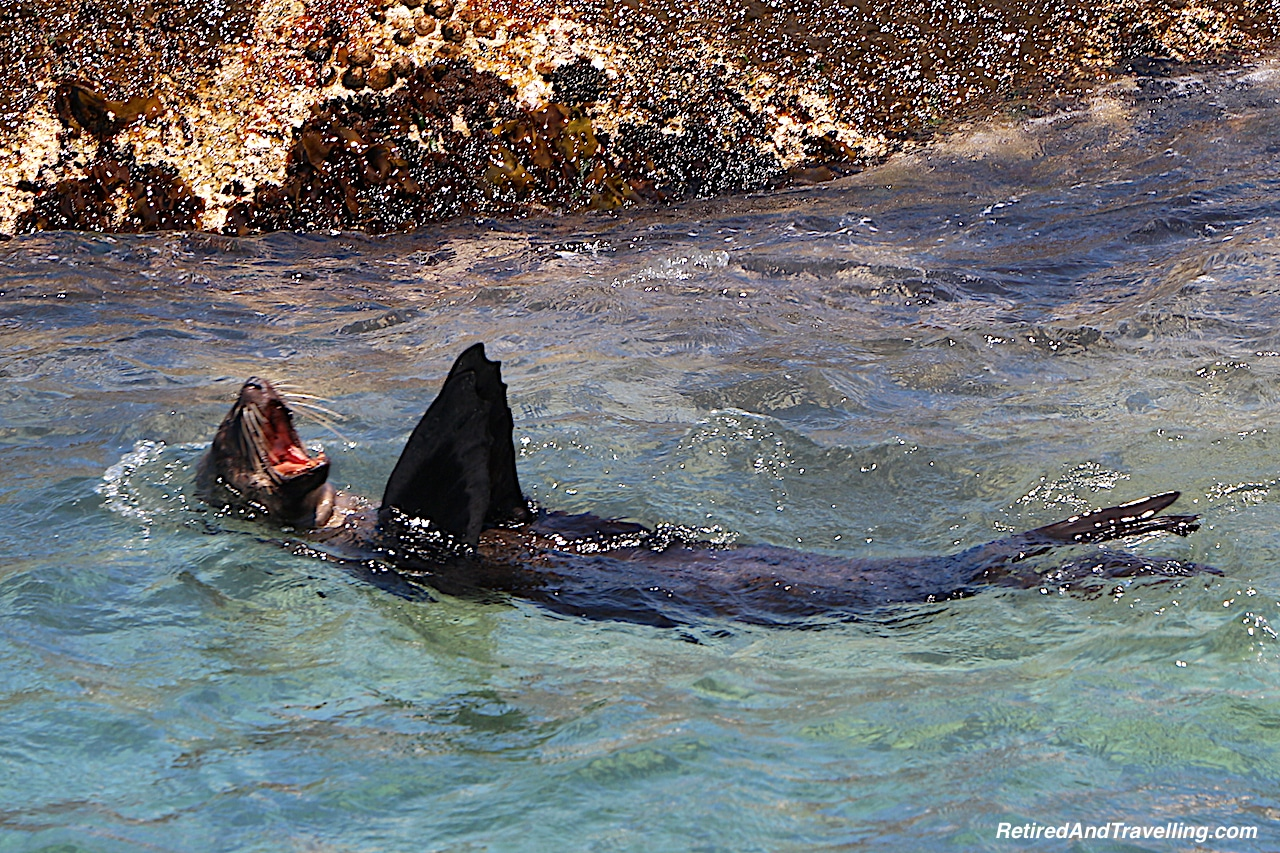 Hout Bay Seals - Tour the Cape In South Africa.jpg