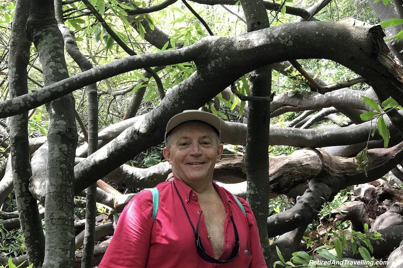 Arboretum - Relax in Kirstenbosch Gardens.jpg