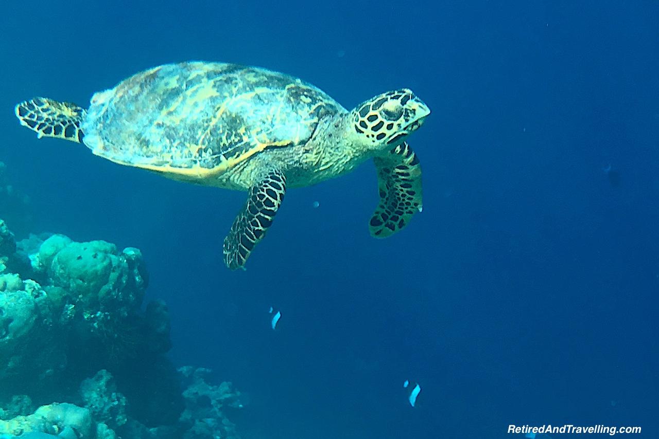 Snorkel Maldives.jpg