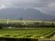 Wine Tour in Stellenbosch.jpg