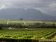 Wine Tour in Stellenbosch.jpg