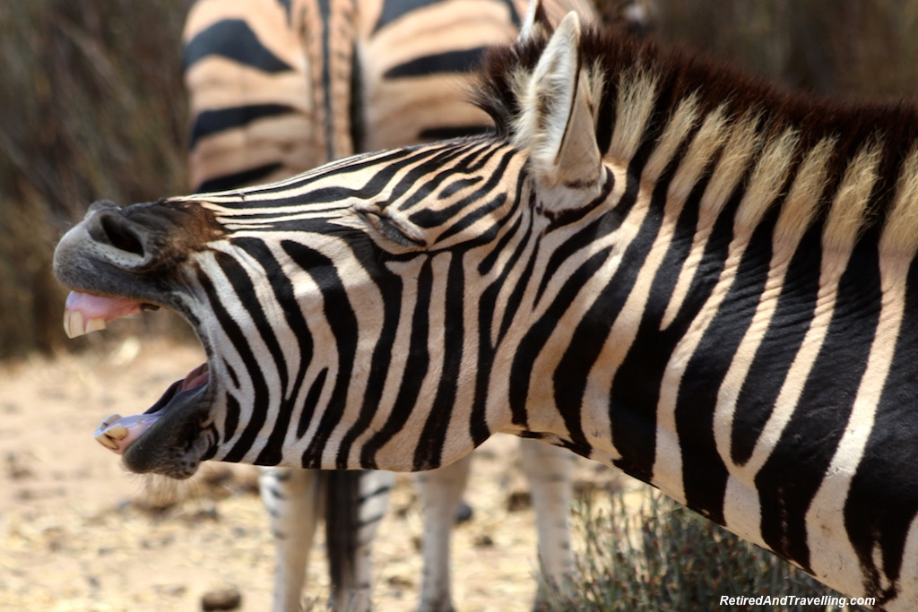 African Zebra - Game Drive From Cape Town.jpg