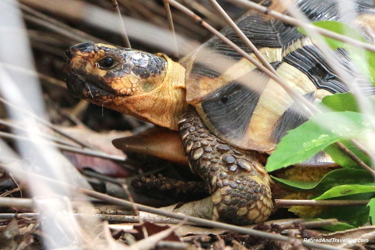 Turtle - Relax in Kirstenbosch Gardens.jpg