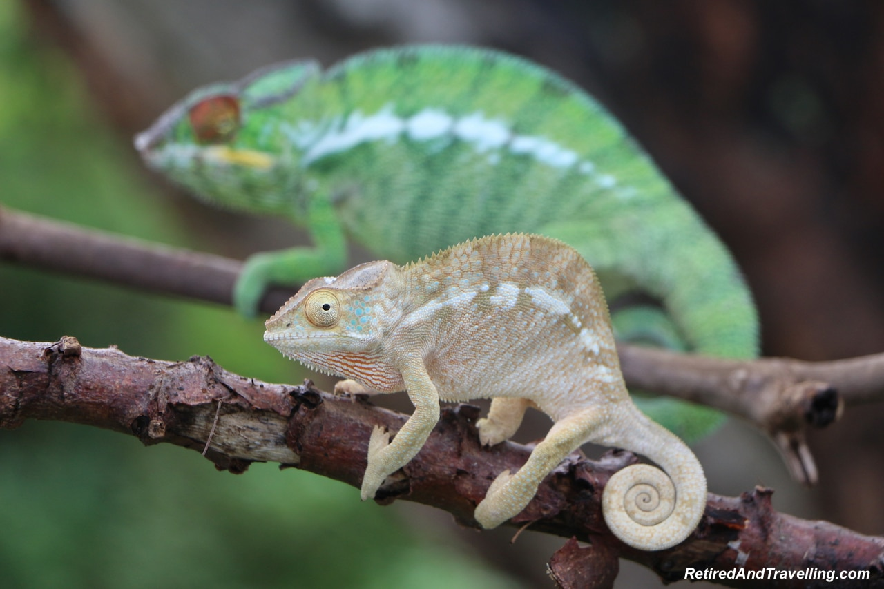 Chameleons In The Country - Countryside Tour of Nosy Be.jpg
