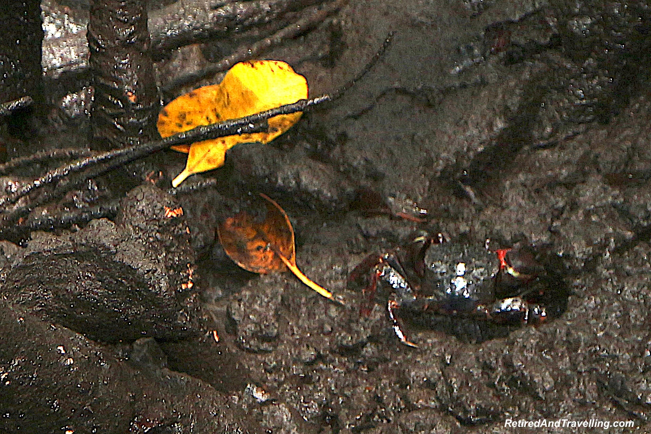 Jozani Mangrove Crabs - Touring Zanzibar In the Rain.jpg