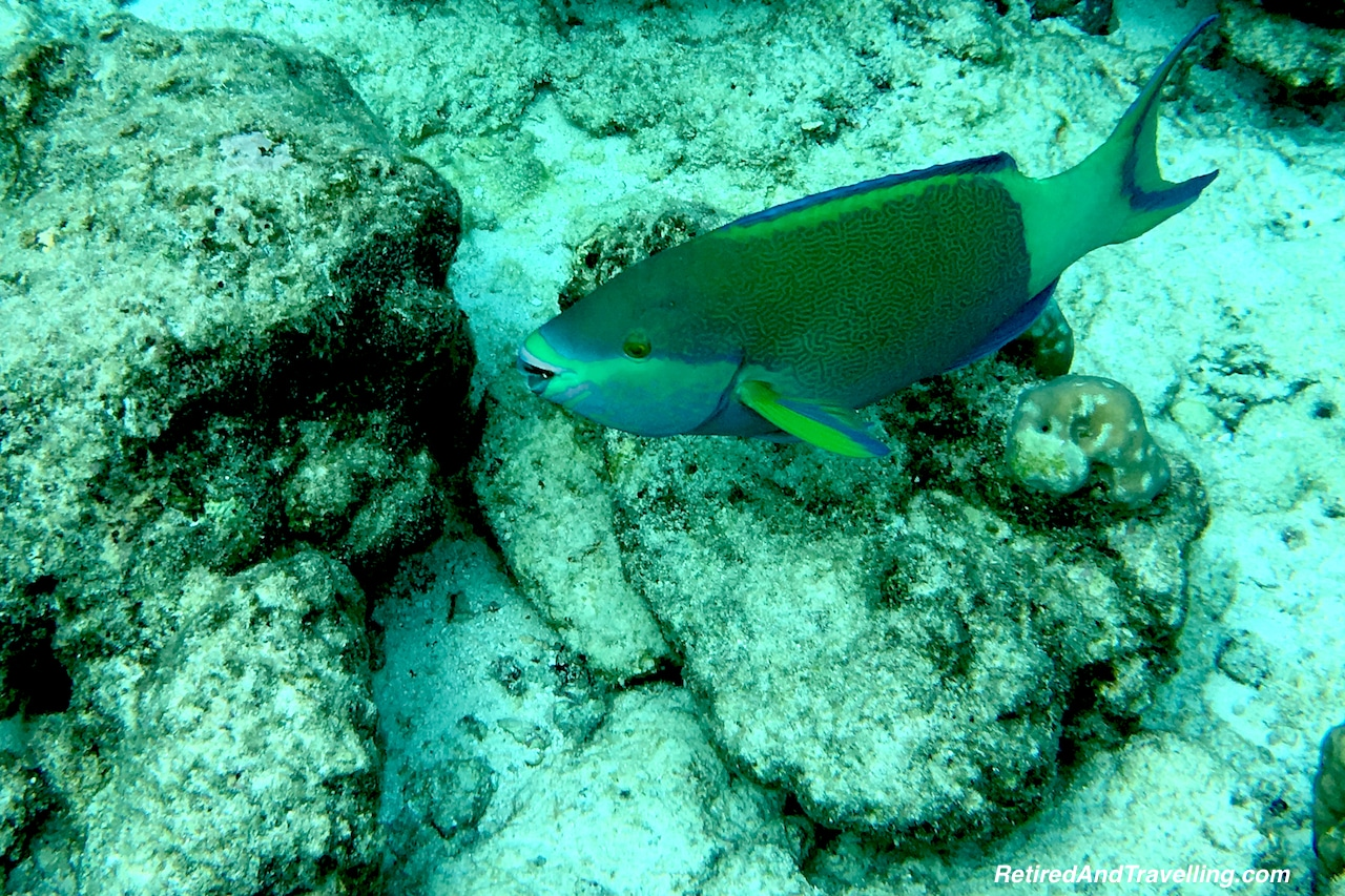 Colourful Parrot Fish- Snorkelling in the Maldives.jpg