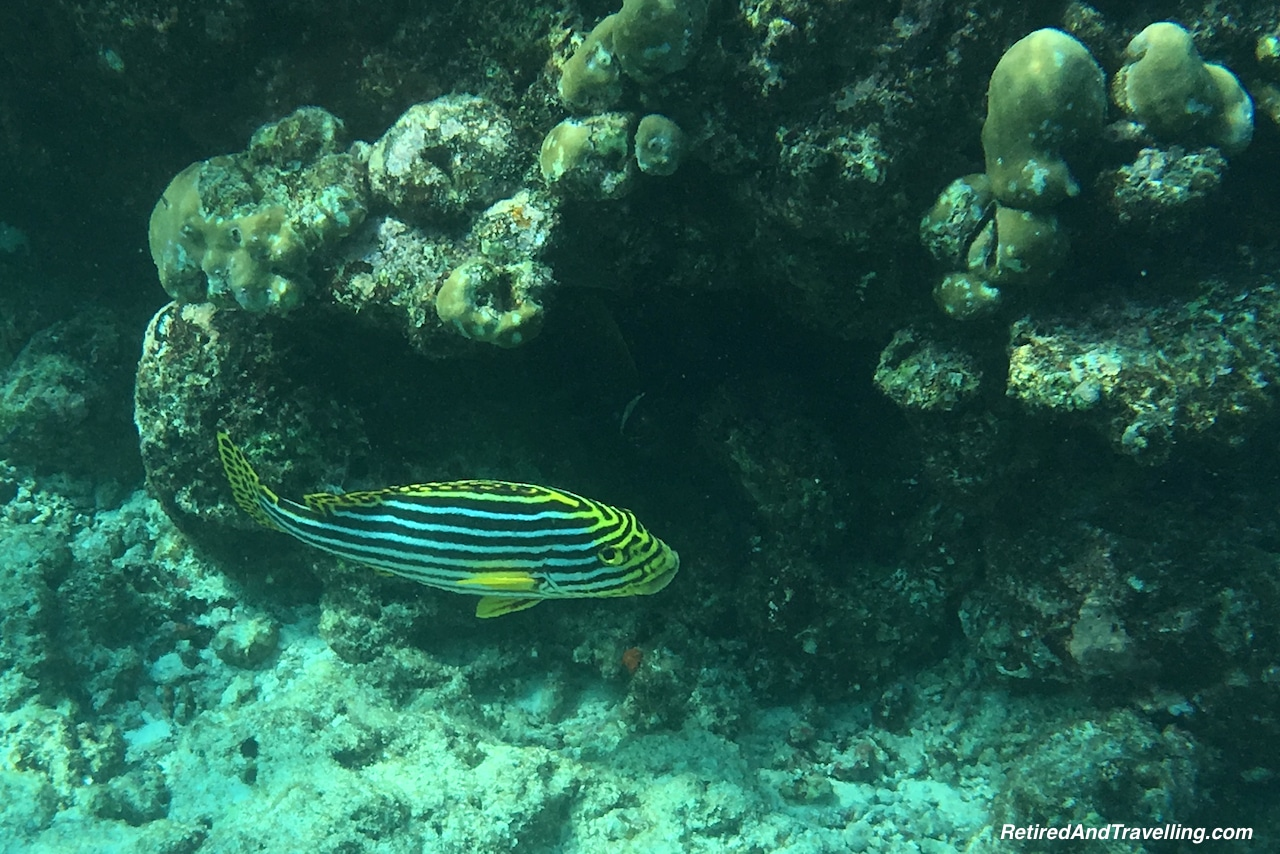 Colourful Striped Fish - Snorkelling in the Maldives.jpg