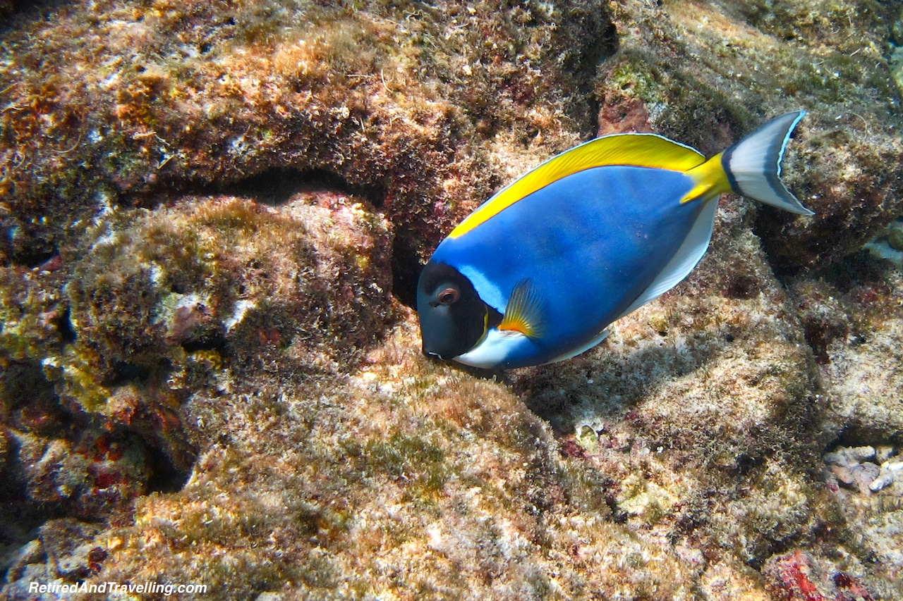 Colourful Blue Fish - Snorkelling in the Maldives.jpg