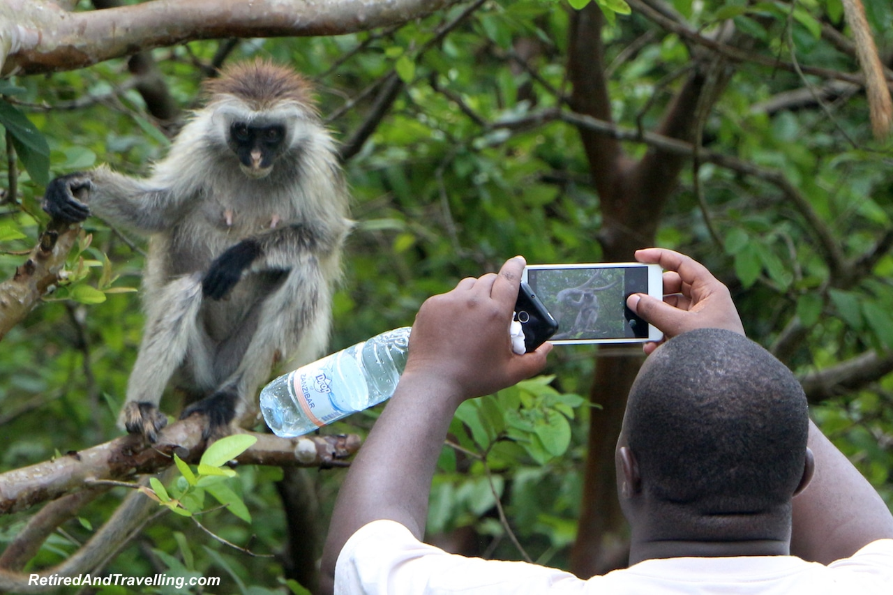Jozani Forest Colobus Monkey Photographers - Touring Zanzibar In the Rain.jpg