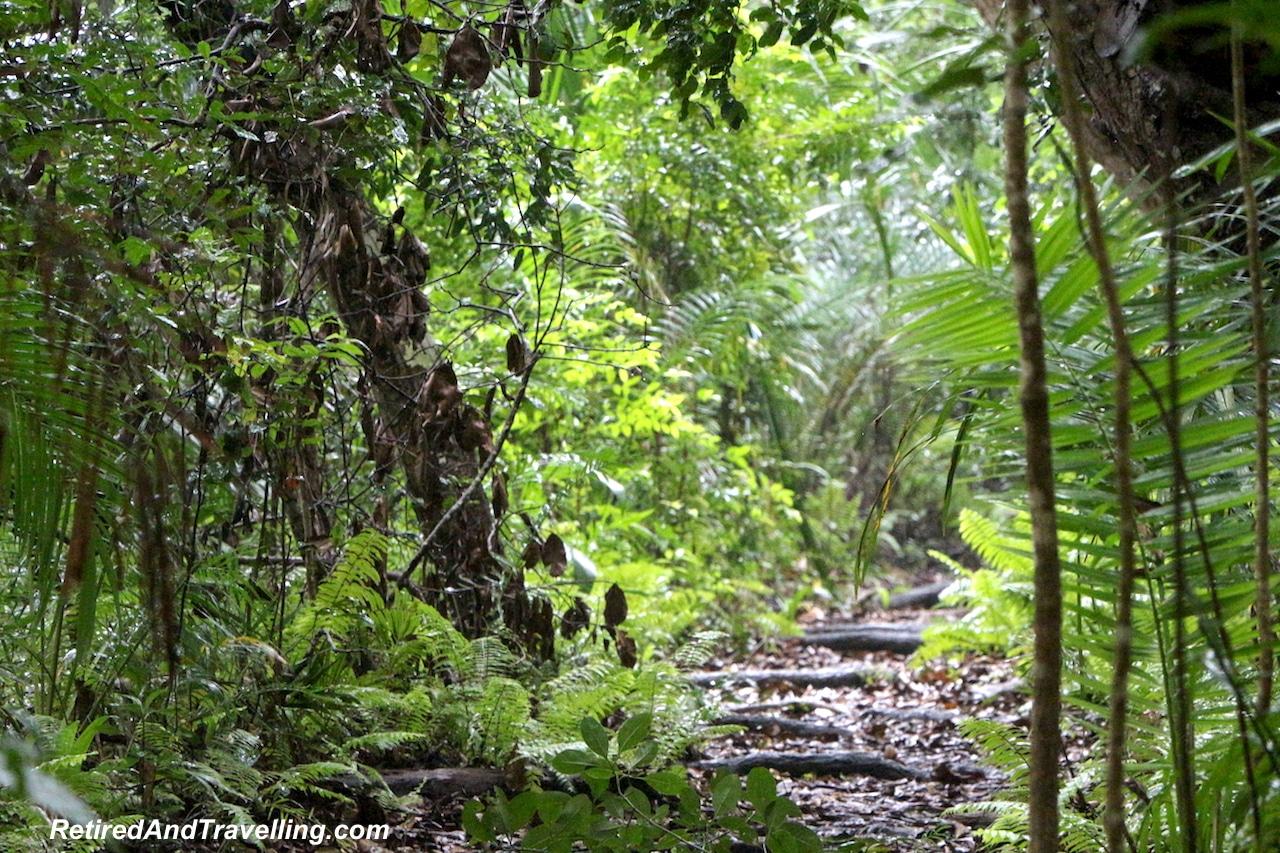 Jozani Rain Forest Walk - Touring Zanzibar In the Rain.jpg