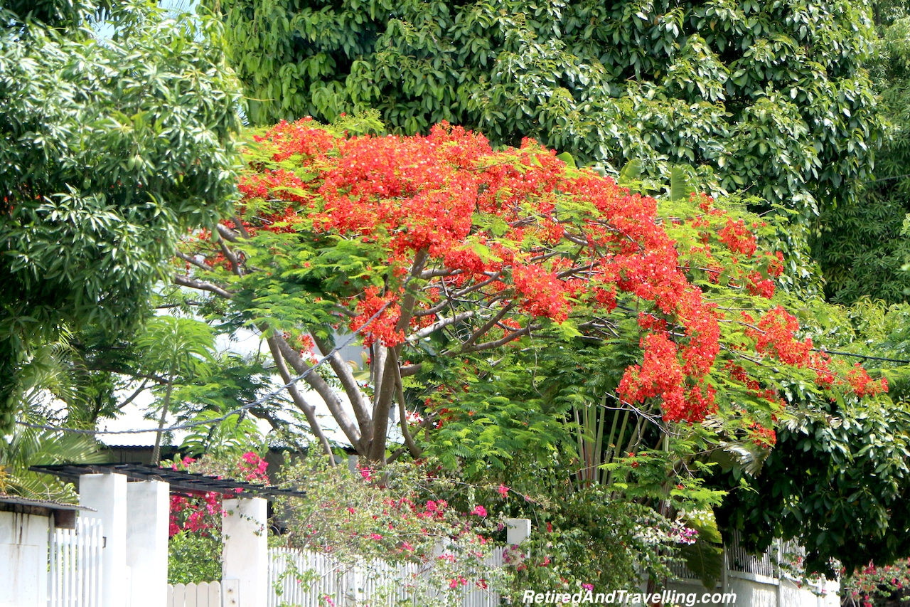 Flame Tree in The Country - Countryside Tour of Nosy Be.jpg