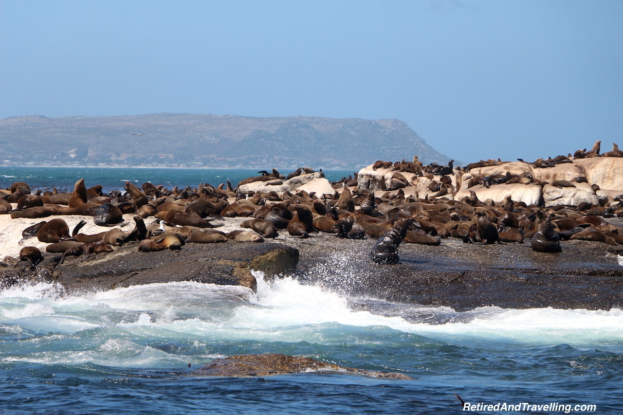 Hout Bay Seals - Sea and Mountains Surround Cape Town.jpg