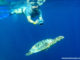Snorkelling in the Maldives.jpg