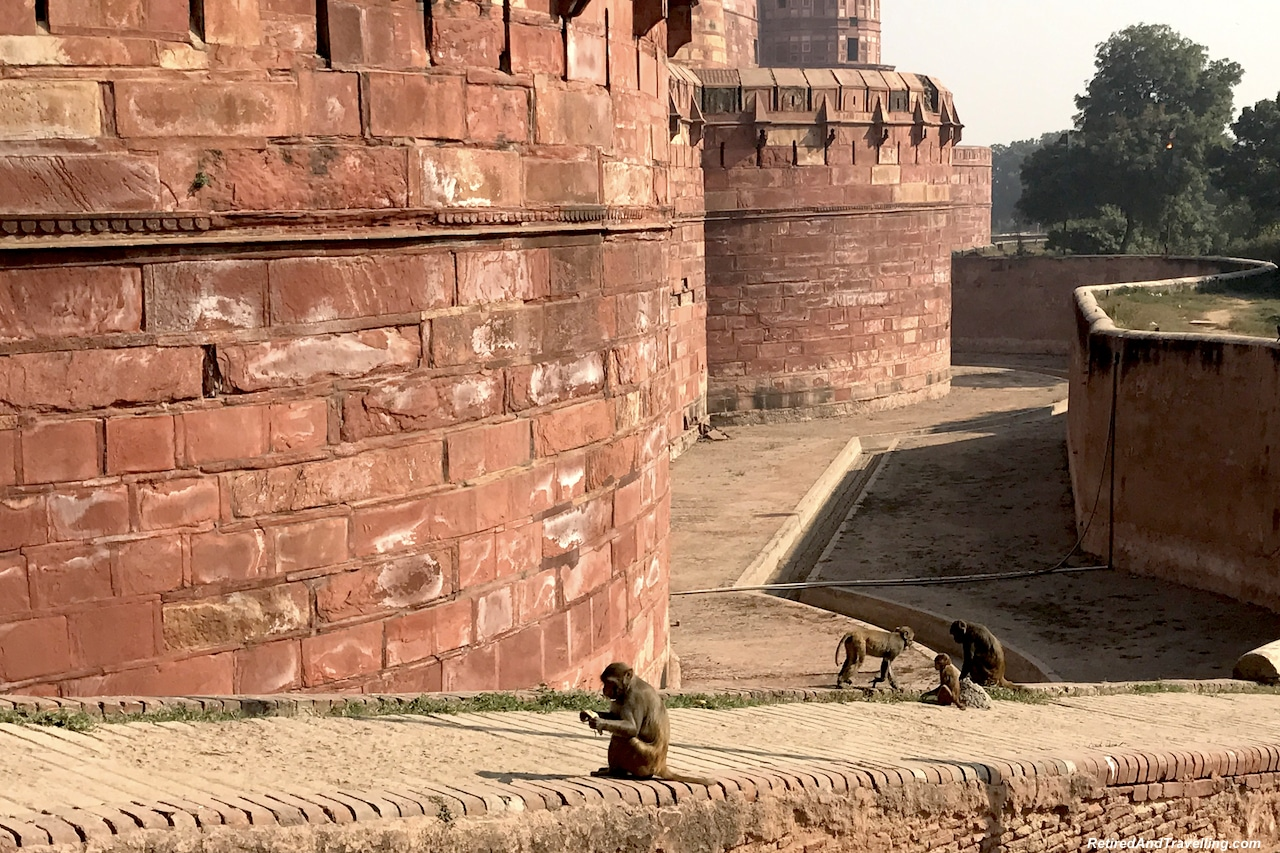 Moat and Monkeys - Red Fort in Agra.jpg