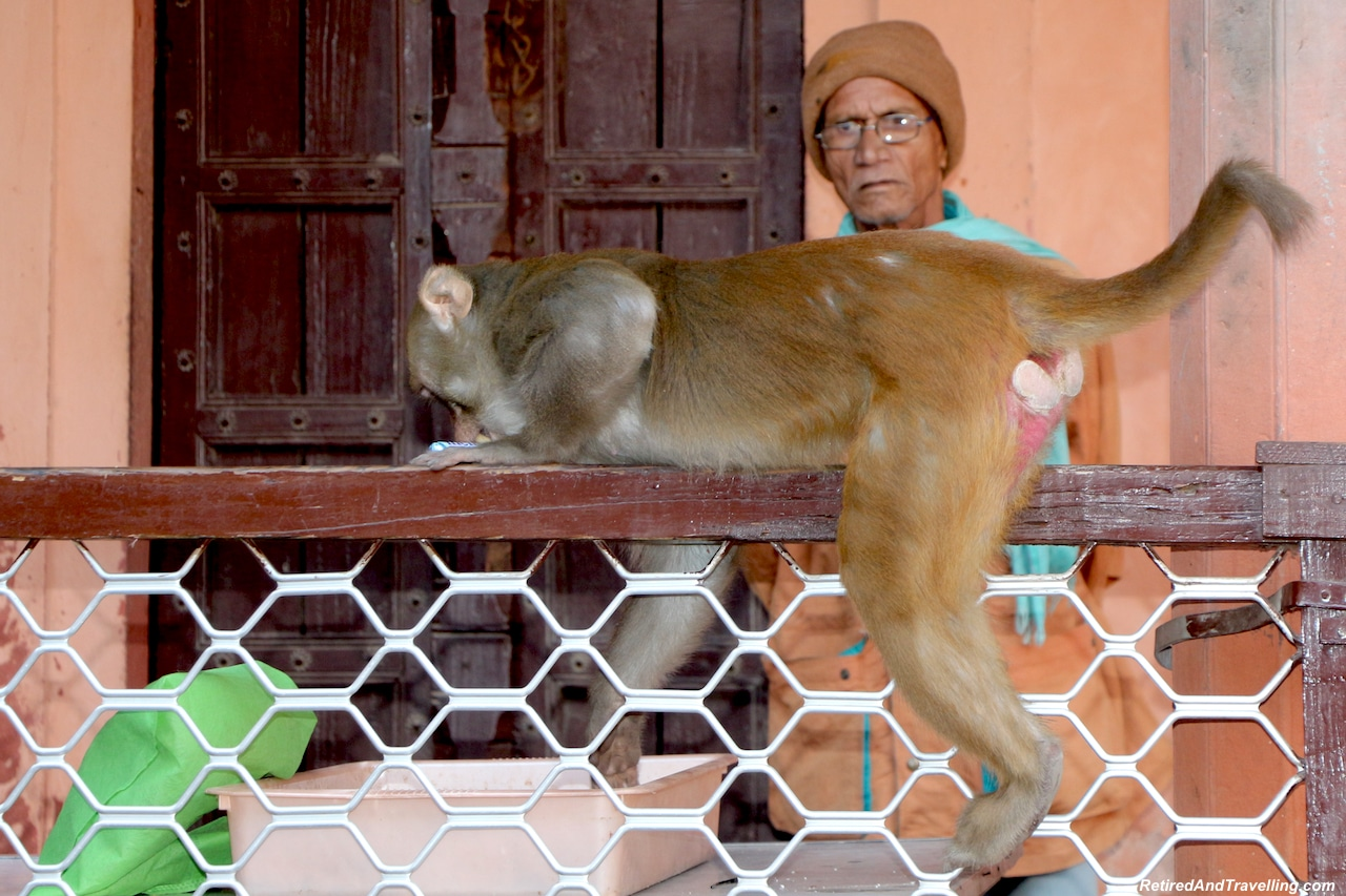 Confiscated Items with Monkey.jpg