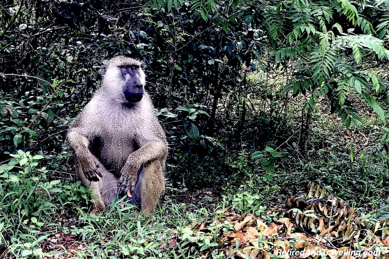 Baboons in Shimba Hills - First Sight of African Animals.jpg
