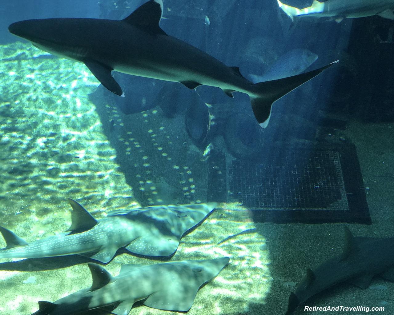 Durban Beach Cargo Hold Sharks - Enjoy The Beach in Durban.jpg