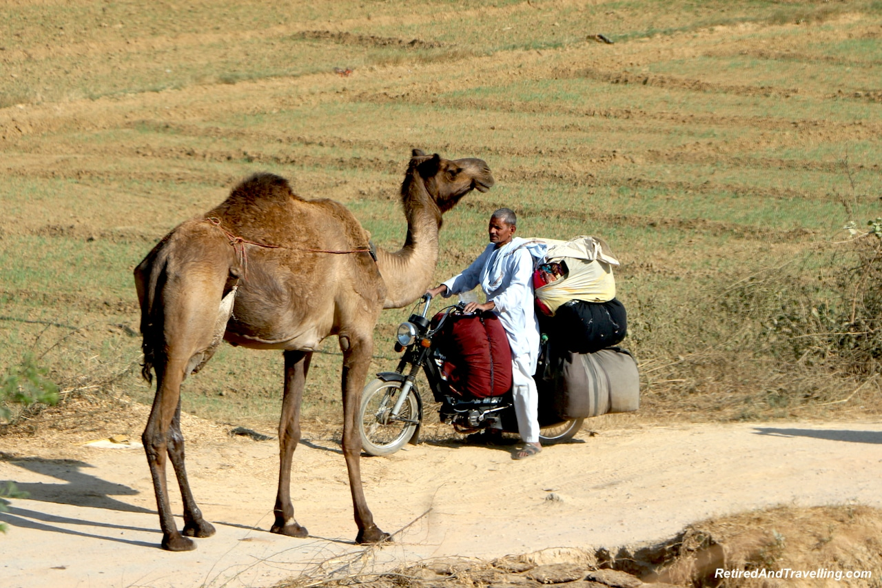 Camels on Drive to Agra - Delhi Drive to Explore Agra.jpg