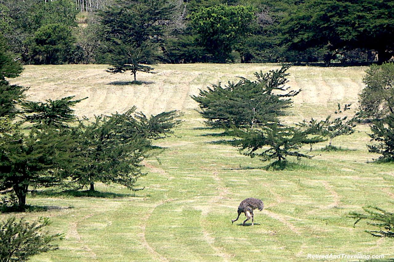 Ostrich Farm - Big Five in South Africa.jpg