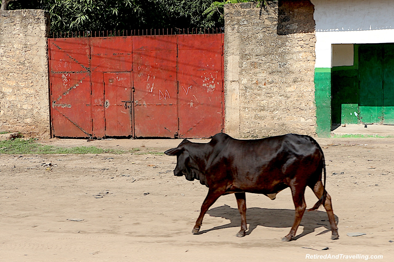 Driving Through Mombasa - First Sight of African Animals.jpg