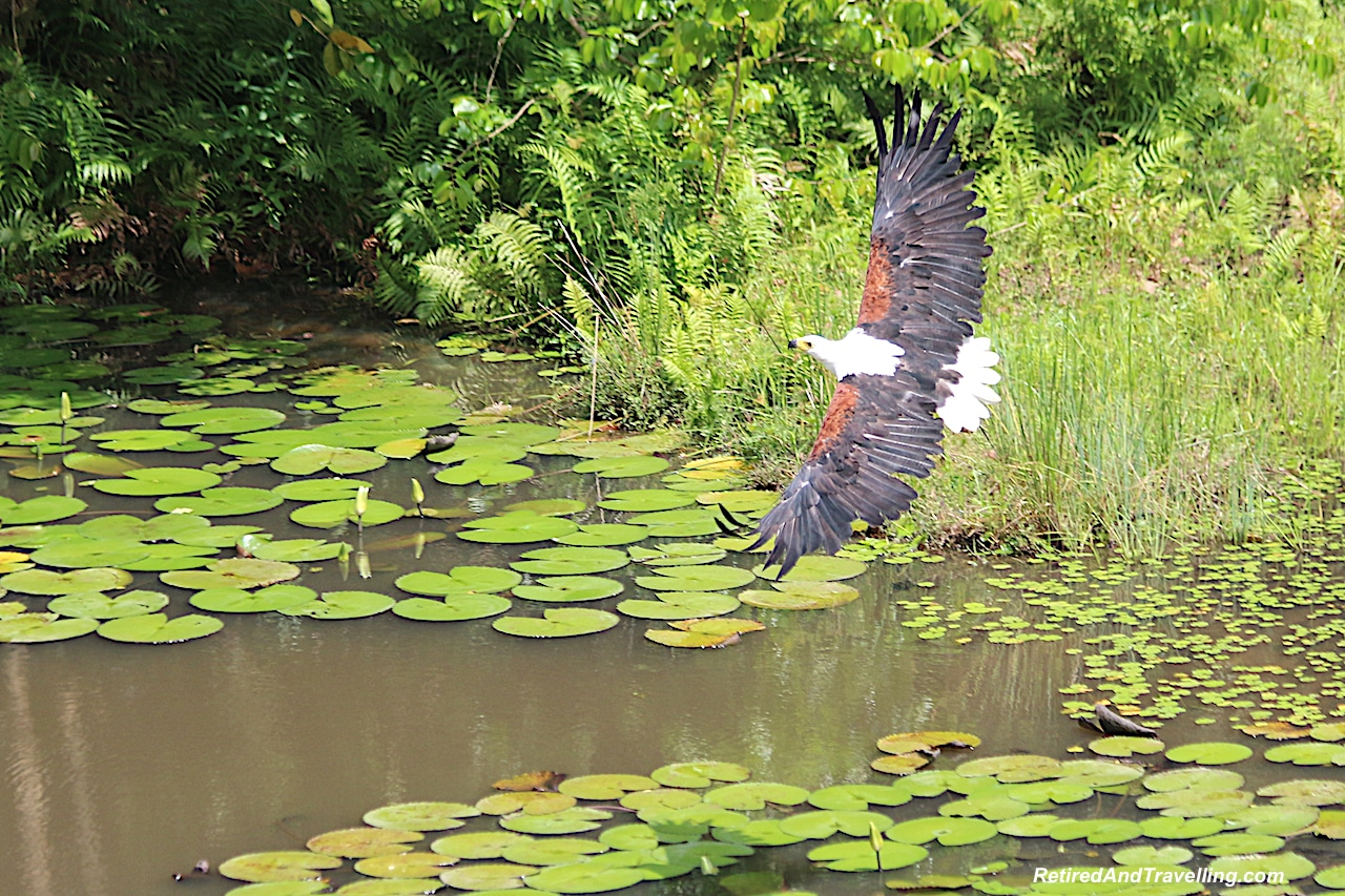 Shimba Hills Lodge Eagle - First Sight of African Animals.jpg